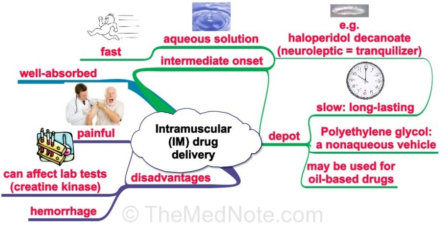 Post image for Intramuscular Drug Delivery