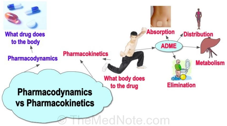 Post image for Pharmacodynamics vs Pharmacokinetics