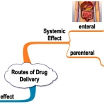 routes-of-drug-delivery2