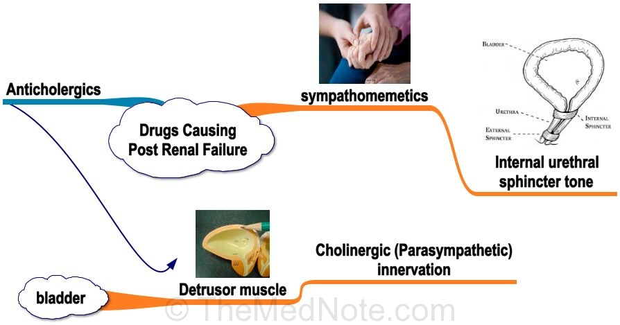 Drugs Causing Post Renal Failure
