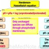 Thumbnail image for Membrane Permeability of Drugs